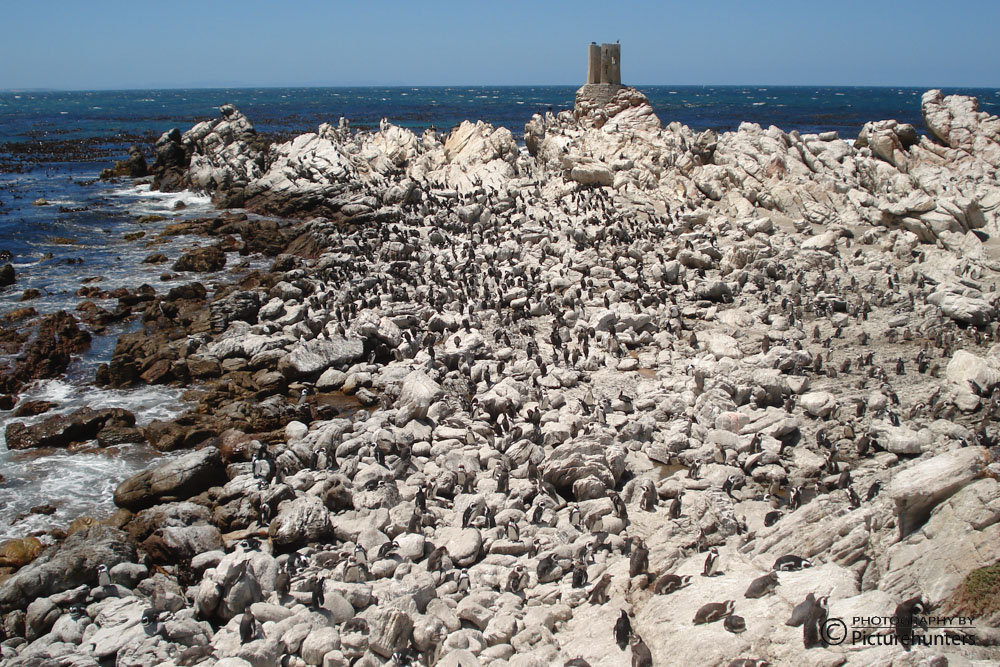 Pinguine am Stoney Point