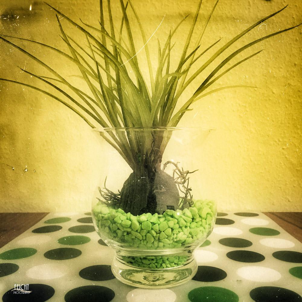 Grüne Deko