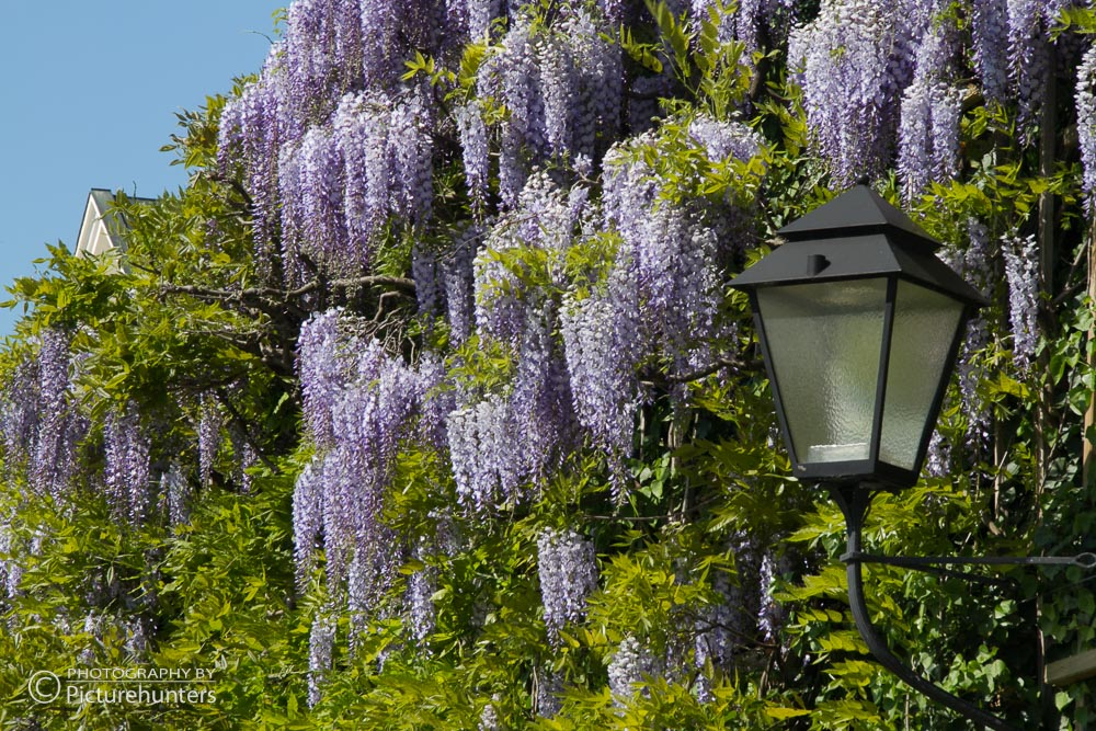 Frühling in Salzburg