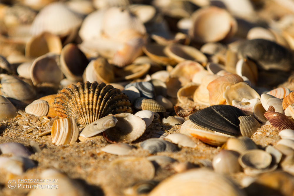 Barril-Strandgut