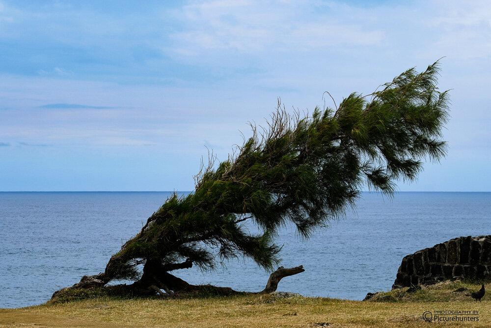 Vom Wind gebeugt
