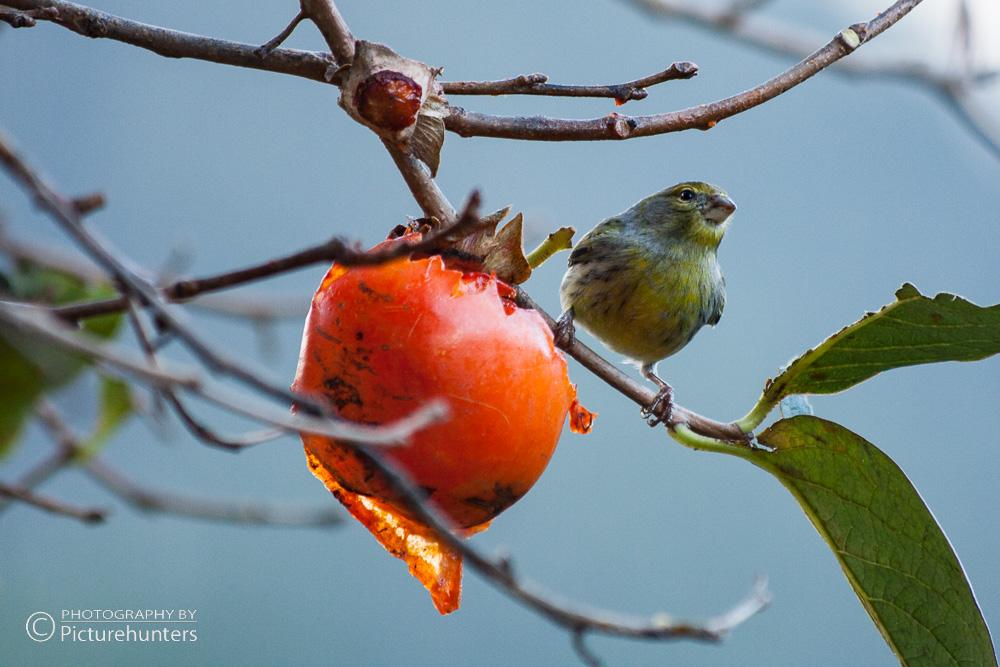 Lecker Vogelfutter