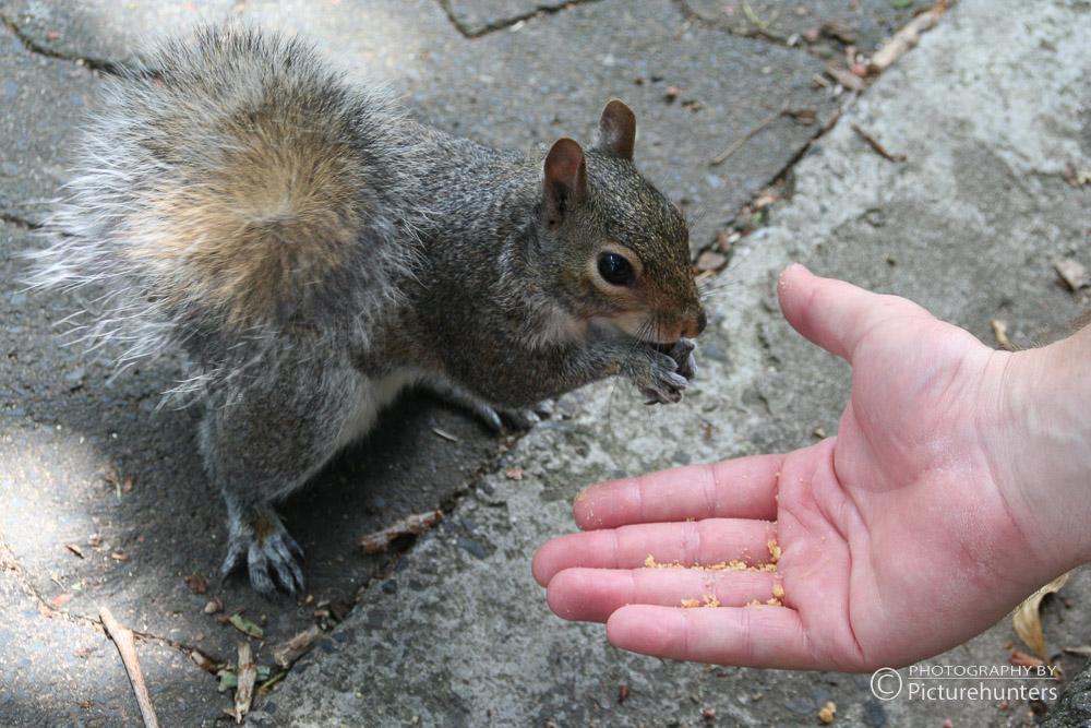 Kapstadt-Eichhörnchen