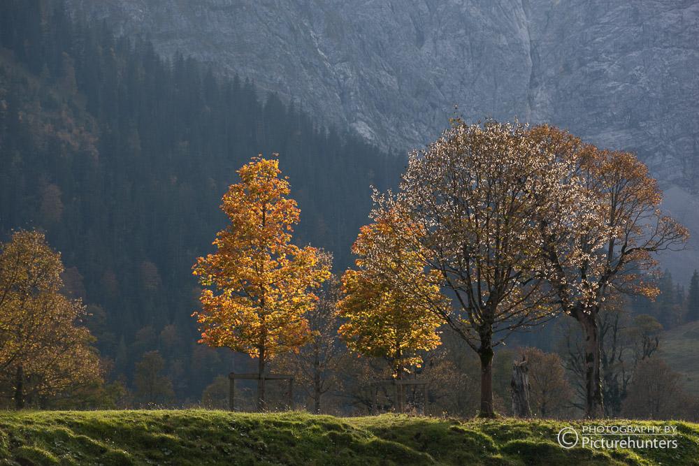 Baumgruppe im Gegenlicht