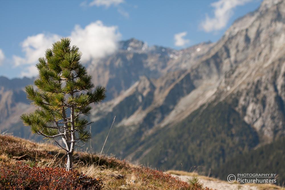 Minibaum vor Bergkulisse