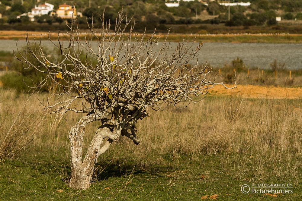 An der Küste | Portugal