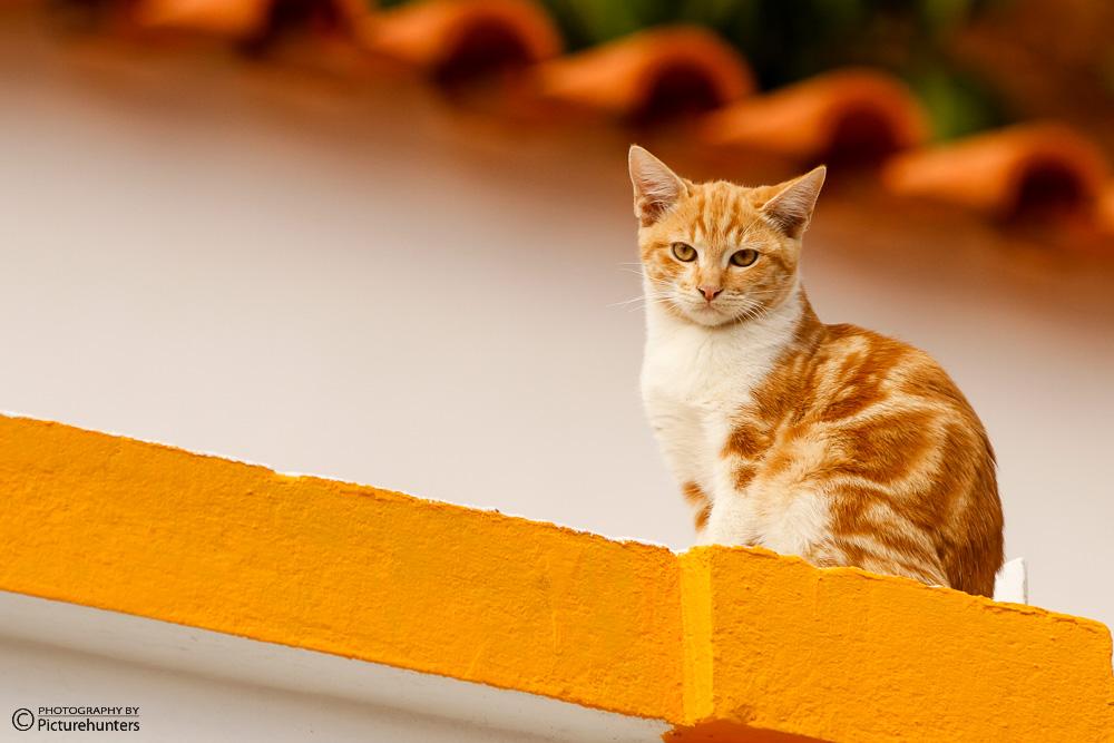 Katze in Silves