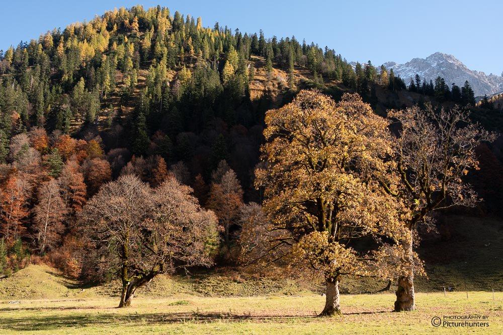 Bunte Bäume | Ahornboden