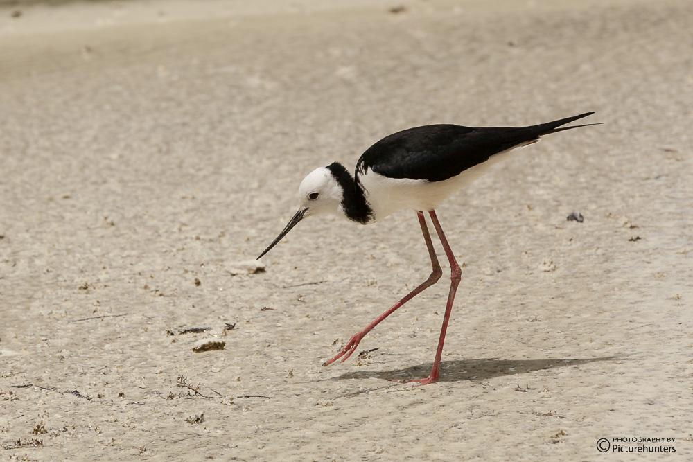 Feingliedriger Vogel