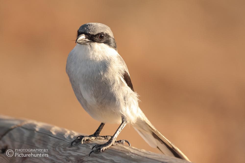 Vogel auf Fuerteventura
