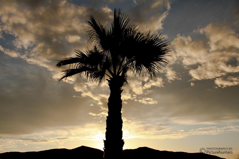 Palme im Gegenlicht
