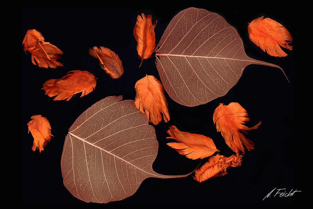 Leaves & Others