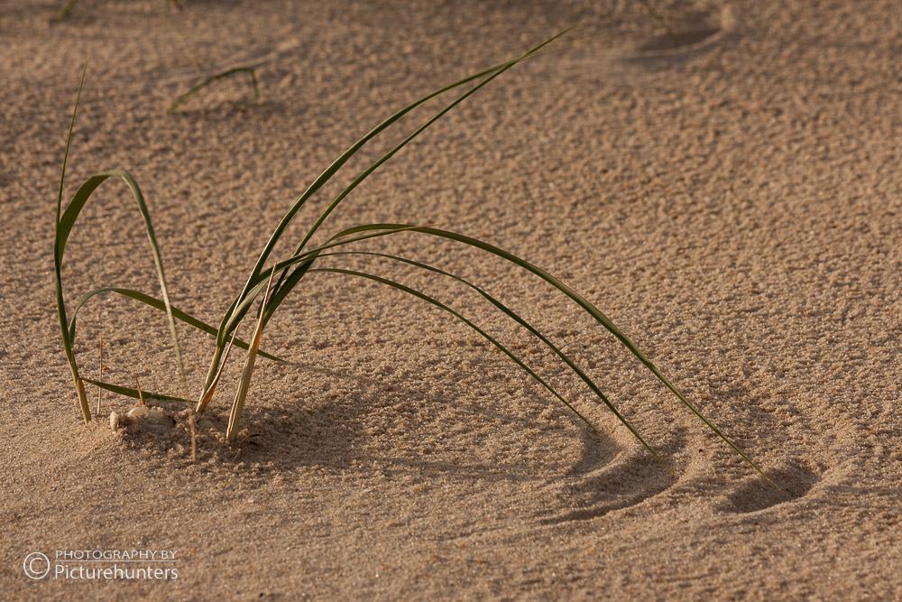 Kleines Seegrasbüschel