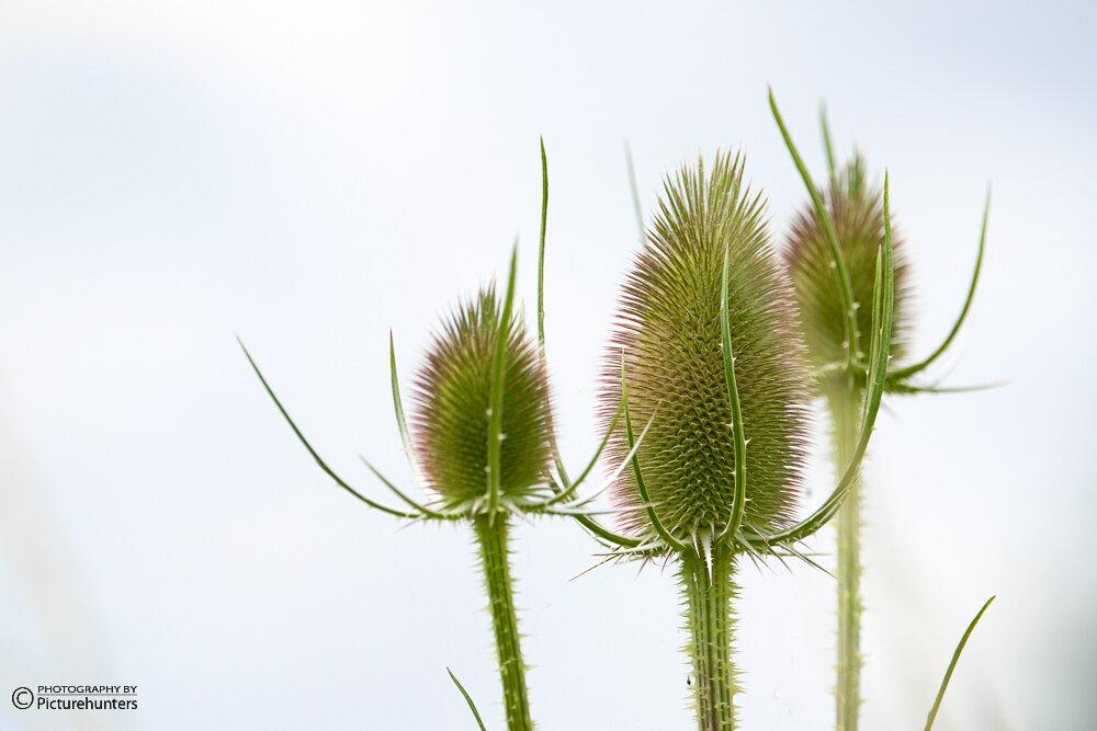 Highkey-Blütenköpfe