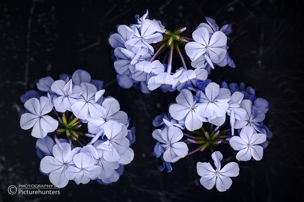 Blaue Blueten