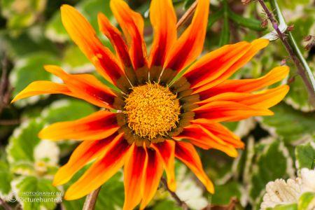 Farbenfrohe Blüte