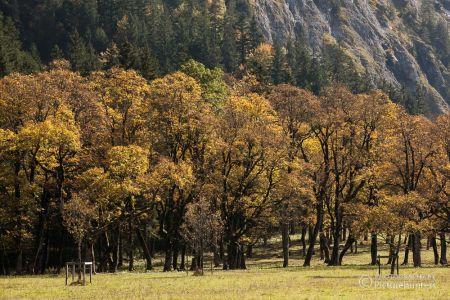 Herbst am Ahornboden