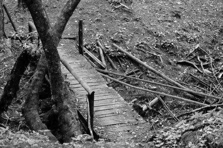 Waldwege