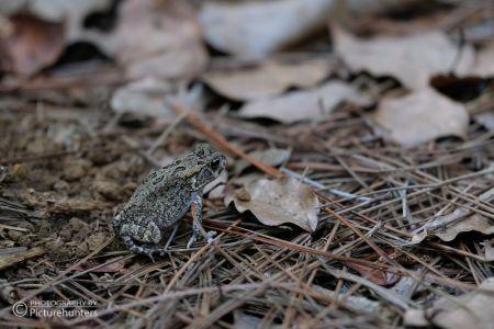 Frosch in einem Wald