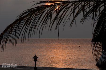 Palme am Abend