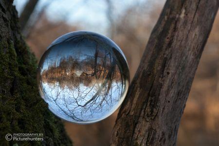 Glaskugel im Baum