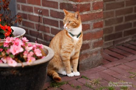 Katze in Amsterdam