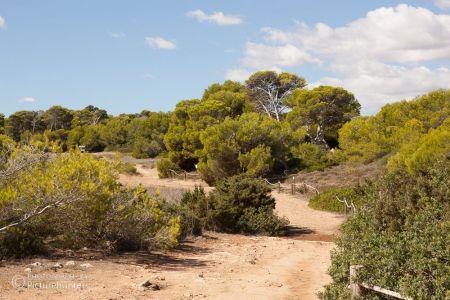 Wanderweg und Bäume