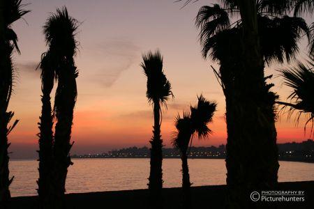 Palmen in Malaga am Strand