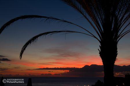 Palme und Sonnenuntergang