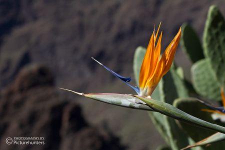 Blüte im Tenogebirge