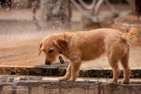 Hund in Verona