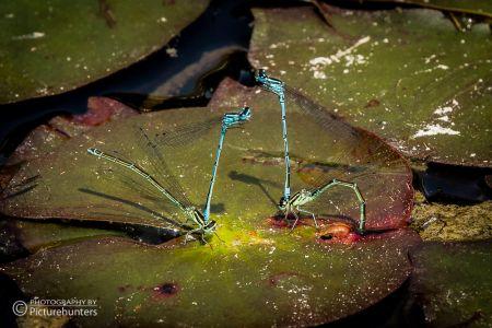 Libellen in einem Park