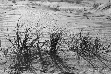 Strandgras