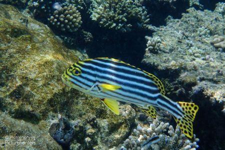 Fisch | Malediven