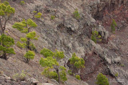 Bäume im Vulkankrater