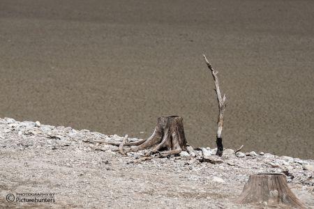 Einsamer Baumstumpf