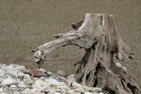 Schwebender Baumstumpf