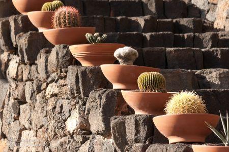 Kakteen im Cactusgarden
