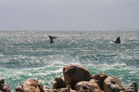 Südafrika-Wale