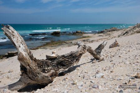 Strandgut | De Hoop