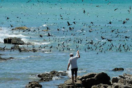 Fischer | Cape Agulhas