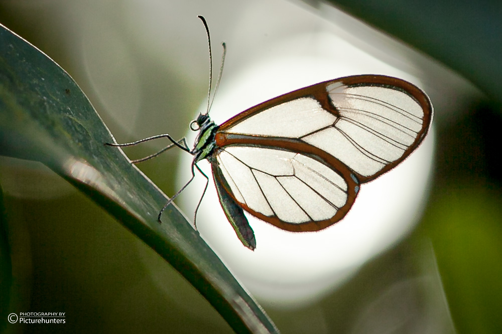 016-Schmetterlinge-14-12-19