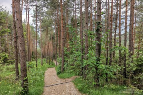 Durch einen Wald