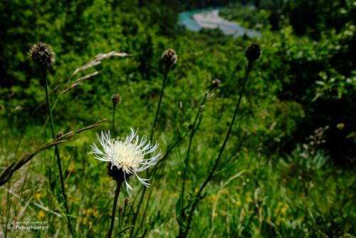 Blüten am Hang