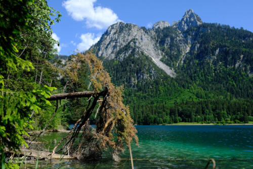Blick über den Alpsee