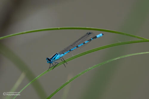 Schöne Libelle