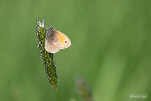 Sehr kleiner Schmetterling