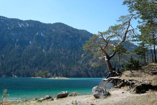Schöner Baum am Ufer
